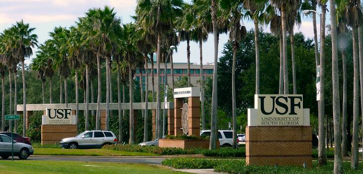 university of south florida admission essay